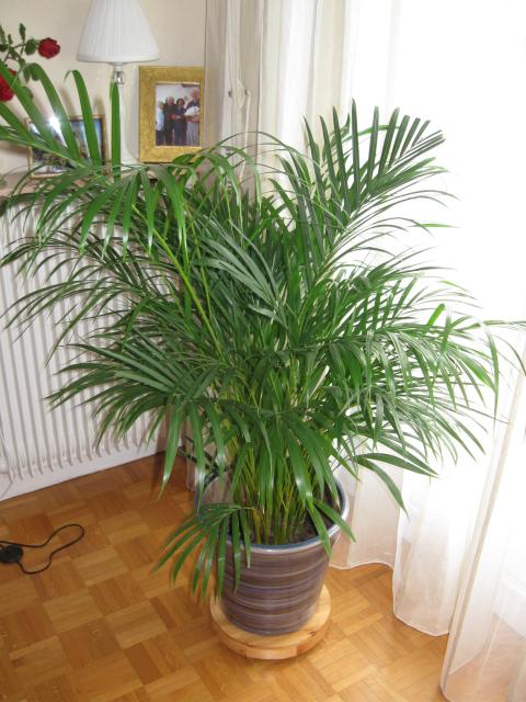 Three Plants For The Urban Male Urbasm