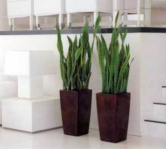 bachelor-pad-mother-in-law-plant
