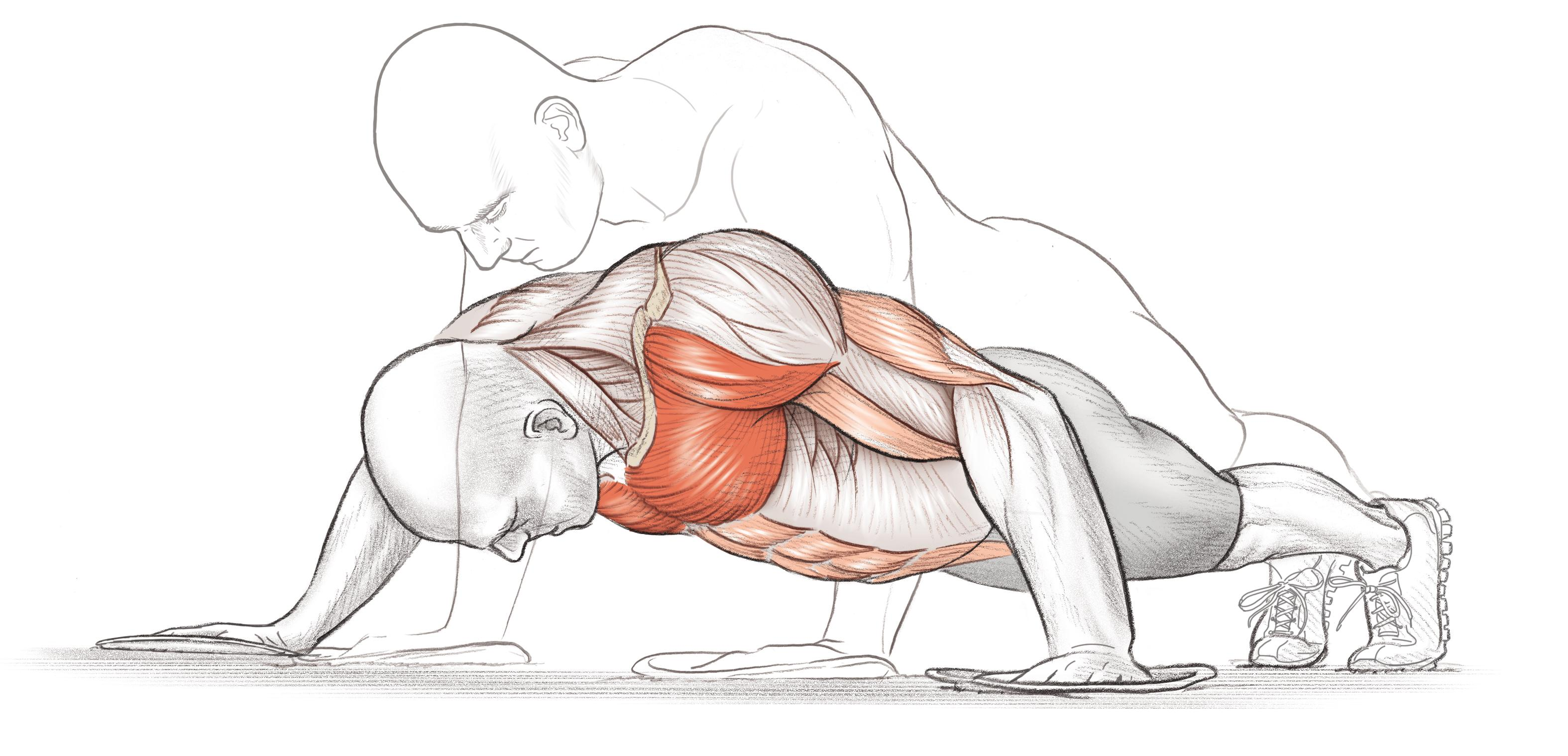 Bodyweight Strength Training for the Chest - Urbasm