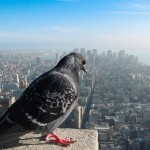 The World From A Birds Eye