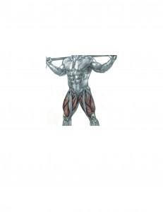 Partial Squat