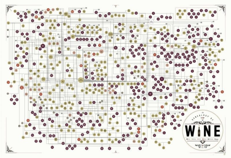 geneology-of-wine