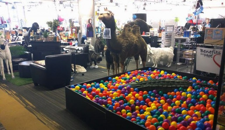 Zos Office Ball Pit
